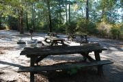 Photo: Lake Waccamaw State Park