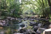 Photo: William B. Umstead State Park